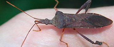 stink-bug-pest-control-nj-3