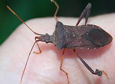 stink-bug-pest-control-nj