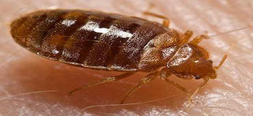 bed-bug-control-nj-TOP